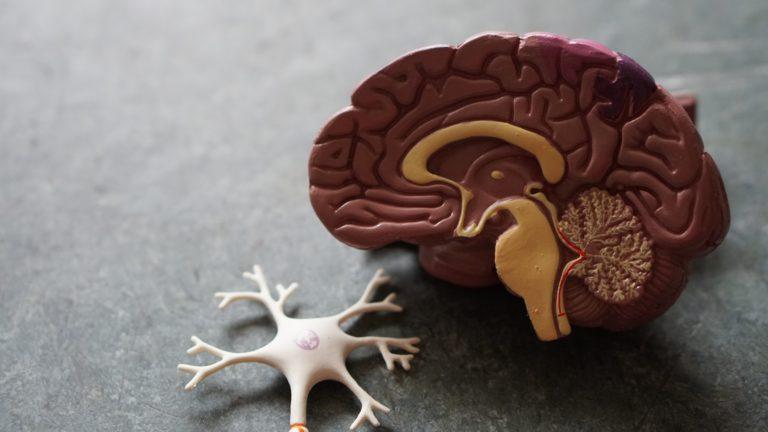 what-is-neurorehabilitation